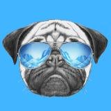 Portret mopsa pies z lustrzanymi okularami przeciwsłonecznymi Fotografia Stock