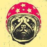 Portret mopsa pies z hełmem Obraz Stock