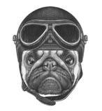 Portret mopsa pies z rocznika hełmem Fotografia Royalty Free