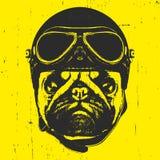 Portret mopsa pies z rocznika hełmem Obrazy Royalty Free