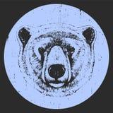 Portret niedźwiedź polarny Obraz Stock