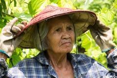 Portret Oude Aziatische Vrouwen royalty-vrije stock foto's
