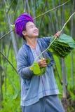 Portret Pao plemienia kobieta w Myanmar Obrazy Stock
