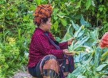 Portret Pao plemienia kobieta w Myanmar Zdjęcia Royalty Free