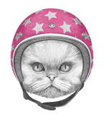 Portret Perski kot z hełmem Zdjęcie Royalty Free