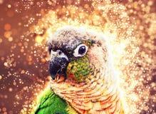 Portret piękna kolorowa papuga, migocąca fotografia Zdjęcia Stock