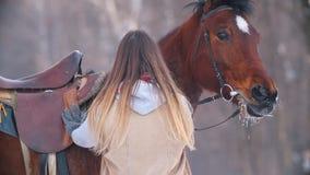 Portret piękny żeński jeździec i jej czarny koń w zimy polu zbiory