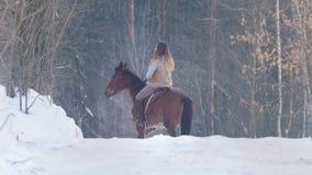 Portret piękny żeński jeździec i jej czarny koń w zimy polu zbiory wideo