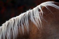 Portret piękny koń Obrazy Royalty Free