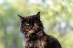 Portret piękny kot na zamazanym tle z bliska obraz stock