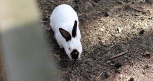 Portret piękny królik na gospodarstwie rolnym zbiory wideo