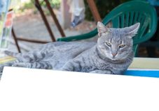 Portret piękny młody dymiący kot Zdjęcie Stock