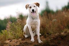 Portret piękny szczęśliwy pies, patrzeje kamerę przy naturą Obraz Royalty Free