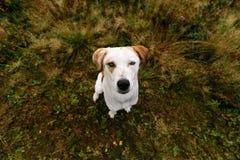 Portret piękny szczęśliwy pies, patrzeje kamerę przy naturą Zdjęcie Royalty Free