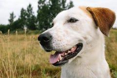Portret piękny szczęśliwy pies, patrzeje stronę przy naturą Zdjęcia Royalty Free