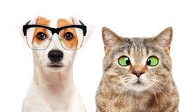 Portret pies i kot z oko chorobami zdjęcia royalty free