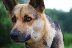 Portret pies na lasowym tle Zdjęcie Stock