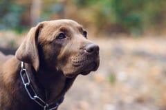 Portret pies zdjęcia royalty free