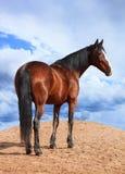 Portret Podpalany koń na tle chmurny niebo Zdjęcie Royalty Free