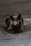 Portret przybłąkany kot Fotografia Royalty Free