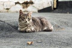 Portret przybłąkany kot Obraz Stock
