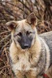 Portret Przybłąkany pies Portret pies w suchej trawie obraz royalty free