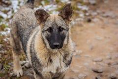 Portret Przybłąkany pies Portret pies w suchej trawie fotografia royalty free