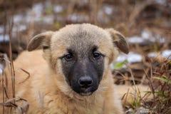 Portret Przybłąkany pies Portret pies w suchej trawie obrazy royalty free