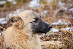 Portret Przybłąkany pies Portret pies w suchej trawie fotografia stock