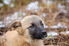 Portret Przybłąkany pies Portret pies w suchej trawie obrazy stock