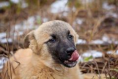 Portret Przybłąkany pies Portret pies w suchej trawie obraz stock
