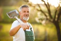 Portret przystojny starszego mężczyzna ogrodnictwo w jego ogródzie, Obrazy Stock