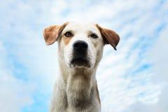 Portret psi patrzeć daleko od z usta otwierającym Zdjęcia Royalty Free