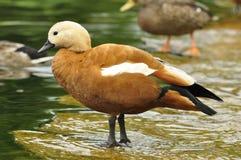 Portret ptak Zdjęcie Stock