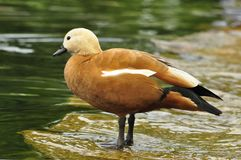 Portret ptak Fotografia Stock