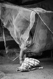 Portret relaksuje w hamaku śmieszny dziecko Obrazy Royalty Free
