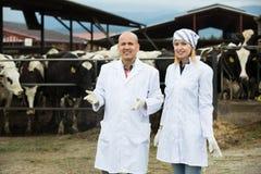 Portret robotnicy rolni w cowhouse Obraz Royalty Free