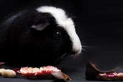 Portret rozochocony królik doświadczalny Obrazy Stock