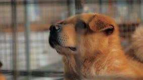 Portret smutny pies w schronieniu za płotowym czekaniem ratować i adoptującym nowy dom Schronienie dla zwierzęcia pojęcia zbiory