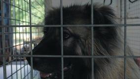 Portret smutny pies w schronieniu za p?otowym czekaniem ratowa? i adoptuj?cym nowy dom Schronienie dla zwierz?cia poj?cia zbiory