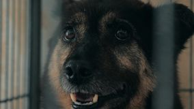 Portret smutny pies w schronieniu za p?otowym czekaniem ratowa? i adoptuj?cym nowy dom Schronienie dla zwierz?cia poj?cia zbiory wideo