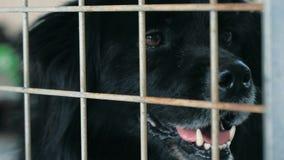 Portret smutny psa n schronienie za płotowym czekaniem ratować i adoptującym nowy dom Schronienie dla zwierz?cia poj?cia zbiory wideo