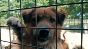 Portret smutny psa n schronienie za p?otowym czekaniem ratowa? i adoptuj?cym nowy dom Schronienie dla zwierz?cia poj?cia zdjęcie wideo