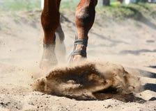Portret sporta koński doskakiwanie przez przeszkody na niebieskich nieb backgroundLegs sporty końscy na cwale w piasku dressage e Obraz Stock