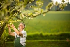 Portret starszego mężczyzna ogrodnictwo obraz stock