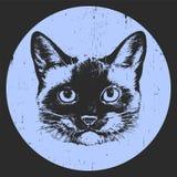 Portret Syjamski kot szczotkarski węgiel drzewny rysunek rysujący ręki ilustracyjny ilustrator jak spojrzenie robi pastelowi trad royalty ilustracja