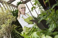 Portret szczęśliwa starsza ogrodniczka kultywuje rośliny w szklarni Zdjęcia Stock