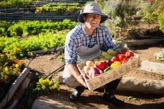 Portret trzyma kosz świezi warzywa szczęśliwy mężczyzna Obrazy Royalty Free