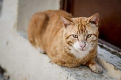 Portret Uliczni koty w Crete Grecja zdjęcia stock