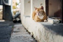 Portret Uliczni koty w Crete Grecja obrazy stock